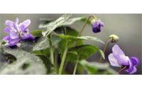 """Le parfum, thème des """"Rendez-vous aux jardins"""" du 2 au 5 juin prochain"""