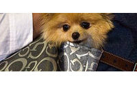 Compañía mexicana presenta último grito en moda canina en desfile de perros