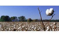Baumwolle: Preise sinken und sinken
