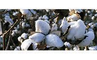 Продажи экологически чистого хлопка выросли на 63% в 2008 году