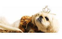 Accesorios de lujo para mascotas, un sector en expansión en Estados Unidos