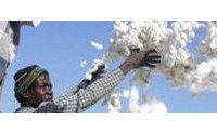 100.000 ettari di cotone transgenico in Burkina Faso