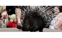 Porcupine, python strut catwalk for Russian zoo
