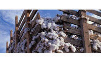 Cotton prices could induce increased clothing prices