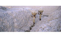 Cotton acreage seen steady in Maharashtra in 2009/10