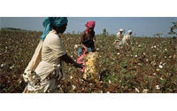 WTO cotton deal will do little for Africa