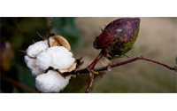 Changed market makes WTO cotton deal harder