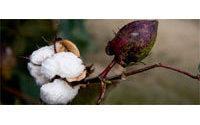 India's 2009/10 cotton exports seen rising 129 percent
