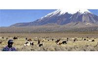 Bolivia's alpaca farmers feel bite of crisis