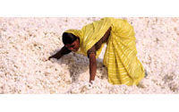 Indian cotton crop to drop if no rain in 7 days