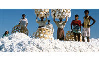Egypt's Alcotexa sells 200 tonnes cotton in past week