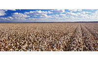 Egypt's Alcotexa sells 200 tonnes of cotton in past week