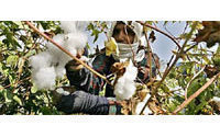 Egypt's 'white gold' cotton losing its lustre