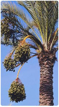 棕榈油:联合利华停止与一位受到绿色和平组织批评的