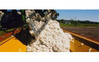 Egypt's ailing cotton industry needs shake-up