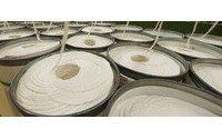 Brasil y EE.UU. dispuestos a negociar las sanciones de la OMC por subsidios al algodón