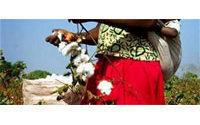 Egypt's Alcotexa sells 400 tonnes of cotton in past week