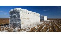 La previsión de superficie para algodón asciende a 58.000 hectáreas en Andalucía