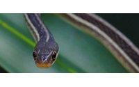 Ni la crema de veneno de serpiente produce efecto 'botox', ni la baba de caracol elimina cicatrices, según experta