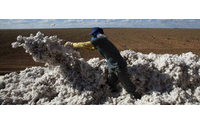 La cosecha de algodón y el retraso en la recolección del girasol son daños graves por las lluvias