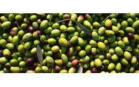 Lanzan línea de cosméticos con aceite de oliva de La Milagrosa de Monterrubio