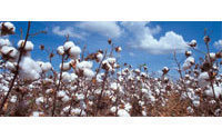Cotton prices down 25% since March
