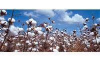 棉价不受市场担心影响