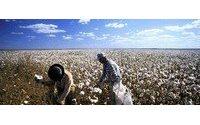 巴西取消10%棉花进口税