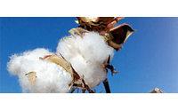 Çin, pamuk piyasasını karıştırdı