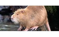 Abrigos de piel... de rata