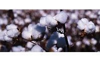 Better data could smooth volatile cotton