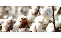 Nueva legislación para textiles de algodón orgánico en Brasil