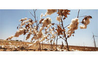 Cotton: traders nervousness pushed up prices