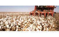 Baumwolle: Ein Weltproduktionsrückgang von 7% wird für 2012/2013 erwartet