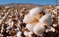 Cotton USA: gli italiani possiedono più capi rispetto al resto del mondo