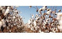 Moçambique: trio de empresas portuguesas cria um polo têxtil