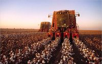 Cotton Australia's Board appoints new chairman & directors