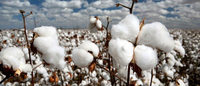 Auctions shift only fraction of China's huge cotton stockpile
