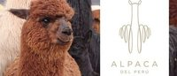 Crece el comercio del tesoro natural de Perú: la alpaca
