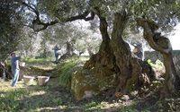Chanel sceglie le olive sarde per il suo nuovo siero della giovinezza