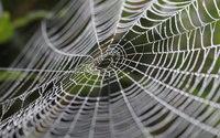 Cientistas suecos criam fibra que imita a teia de aranha