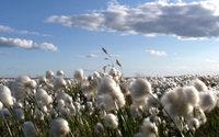 Coton : le prix de la matière vient renforcer les surfaces de culture