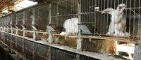 Denmark's Bestseller to stop selling angora fur
