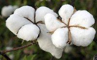 Baumwolltaschen: Wie ökologisch sind die Alltagsbegleiter?