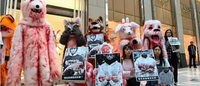 动物保护者在香港Fendi门店抵制示威 皮草争议不断