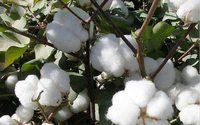 Maintaining NAFTA benefits is crucial, says US cotton council