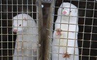 Крупнейший в мире меховой аукцион закроется из-за уничтожения Данией популяции норок
