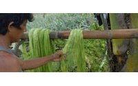 La fibra de hojas de piña: alternativa sostenible al cuero con sello español