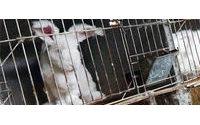 Lacoste rejoint le boycott de l'angora