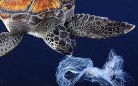 Seaqual : une fibre à base de déchets plastiques océaniques